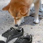 足の臭いもバランス補正インソールで解決できるか?