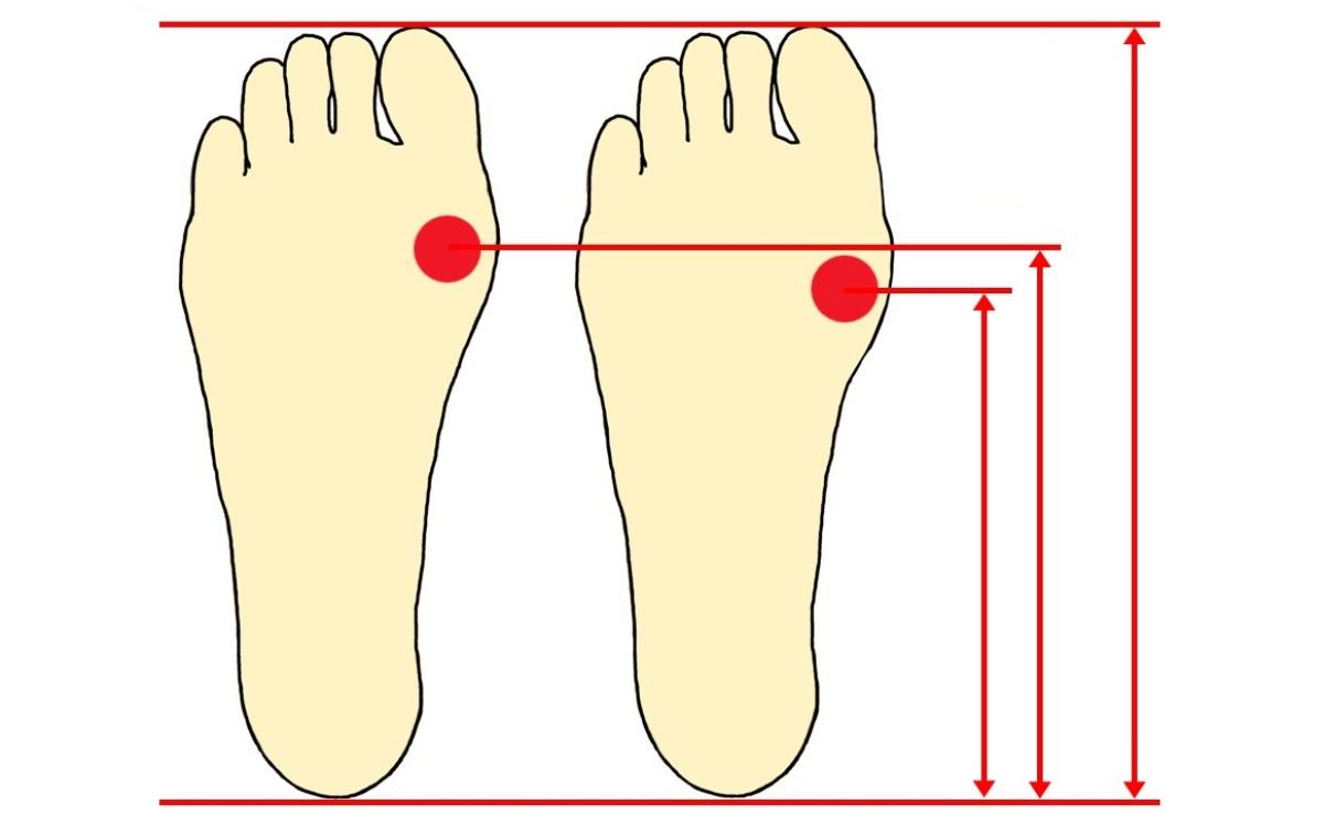 足裏アーチの長さは足の長さとリンクしていない。